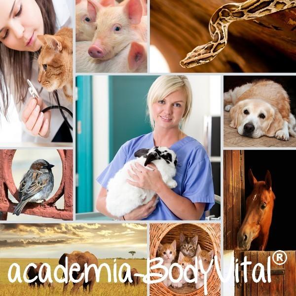 Usui Reiki Tier VitalPractitioner Ausbildung